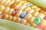 ГМО - польза или вред?