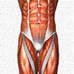 Мышцы кора. Почему это так важно?