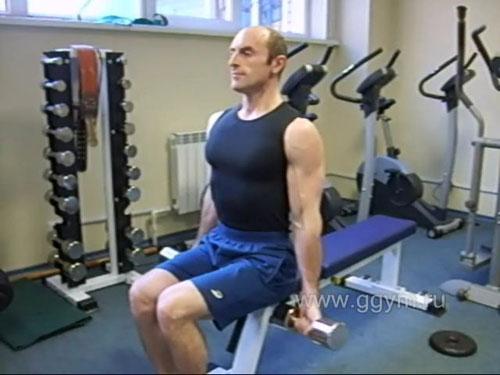 Комплекс упражнений с гантелями для начинающих. Сгибания рук сидя.