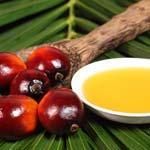 Пальмовое масло в продуктах. Это вредно или нет?