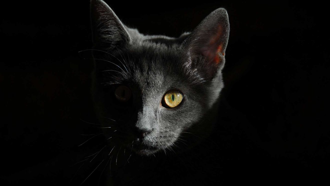 Здоровье, фитнес и квантовый кот Шрёдингера