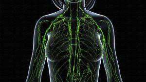 Лимфатическая система человека и причины целлюлита
