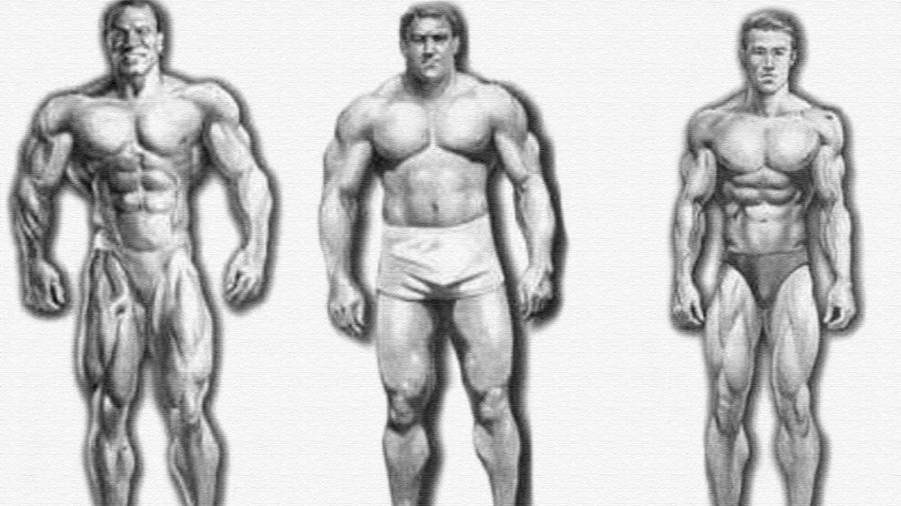 Какой у Вас тип телосложения?
