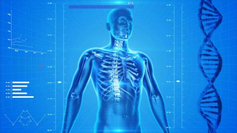 Как Ваше тело реагирует на нагрузку