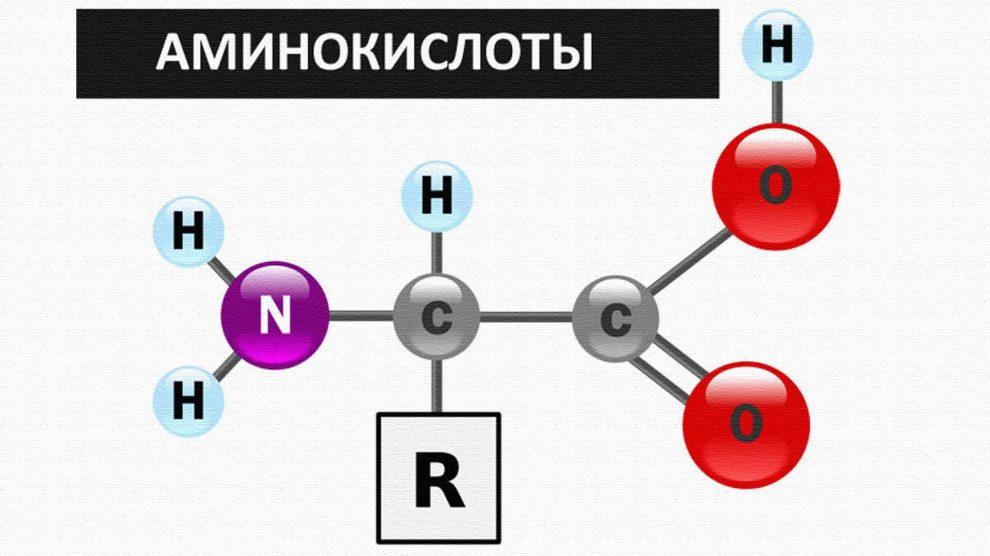 Аминокислоты: BCAA, аргинин, глютамин