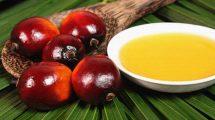 Пальмовое масло. Вредно или нет?