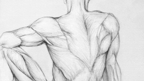 Как связаны фасции и сила мышц