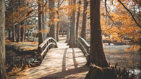Прогулки и метод Цицерона