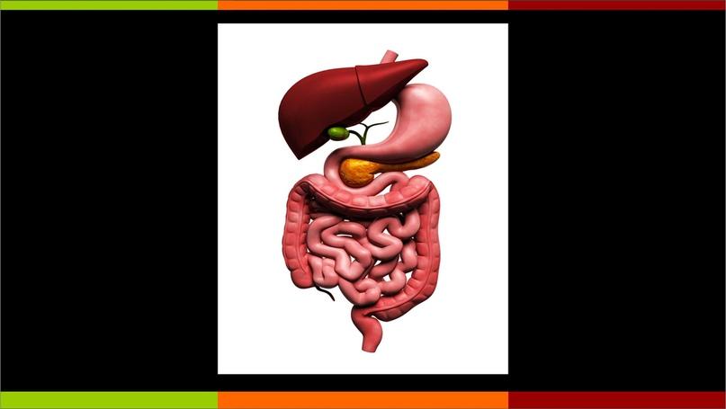 Детокс, пищеварительная система