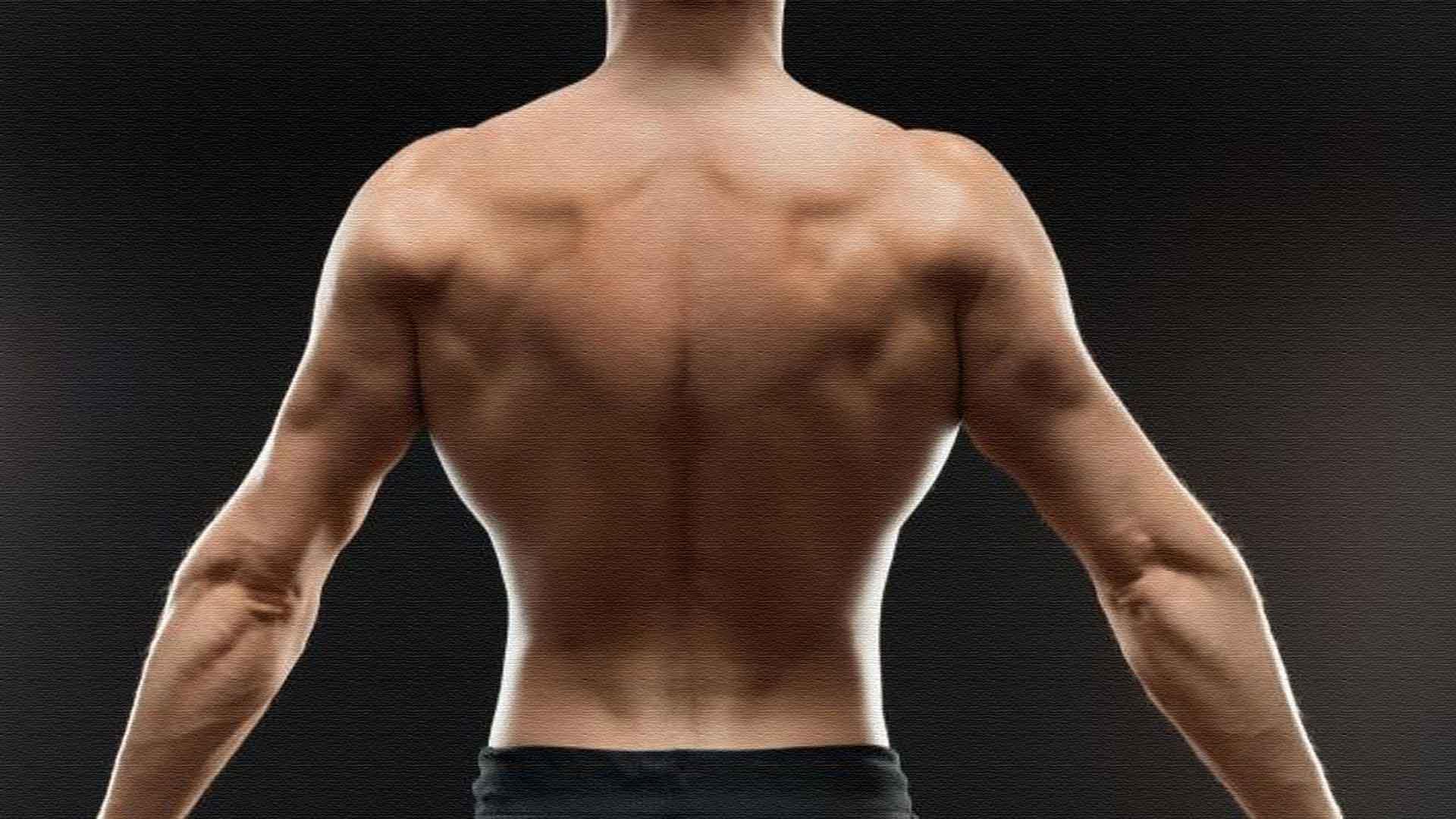 Широчайшие мышцы спины - упражнения анатомия особенности тренировки