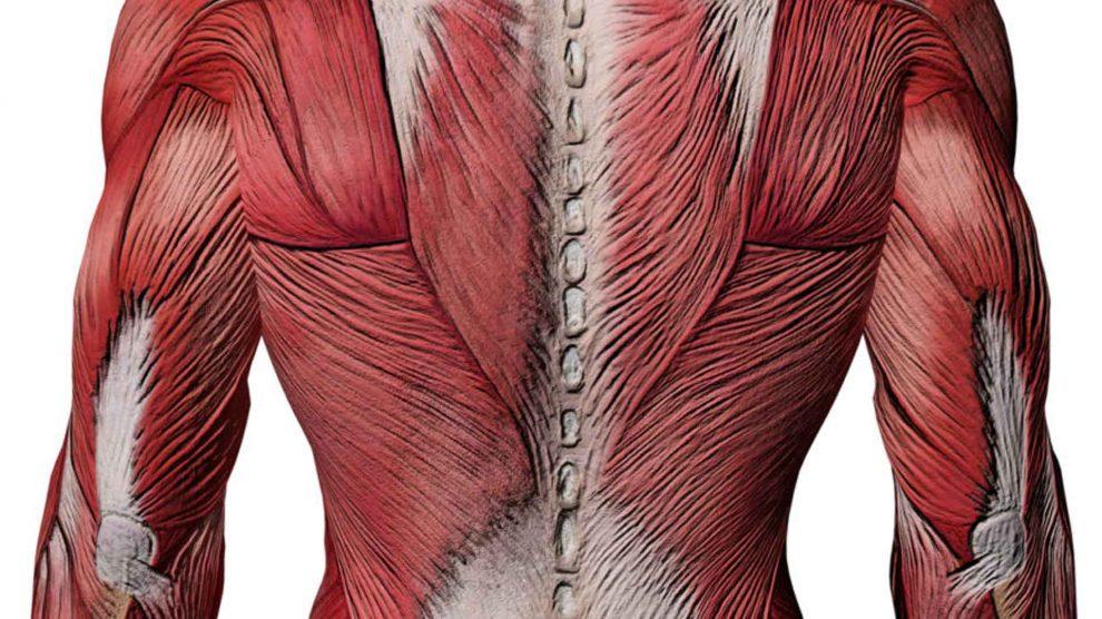 Упражнения для спины. Тренировка мышц, растяжка и расслабление.