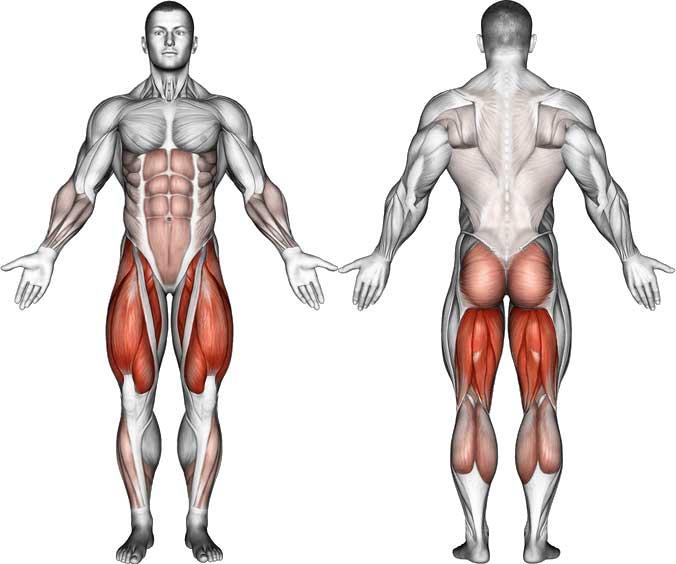 Какие мышцы развиваются с помощью приседаний